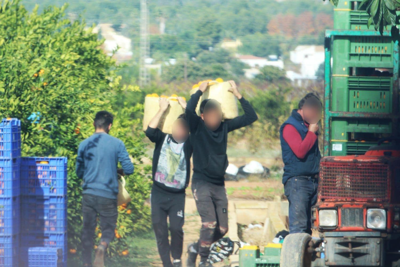 Sclavi pe plantațile de portocale din Onda, provincia Castellon – Spania