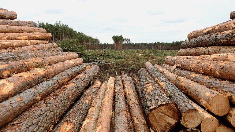 România: Jaful din păduri înflorește în plină pandemie(video)