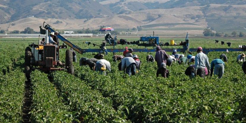 După Germania, Spania caută lucrători sezonieri români pentru următoarele campanii agricole