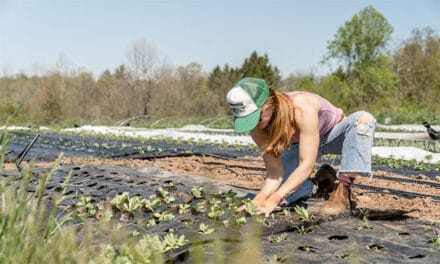 Măsurile prin care muncitorii din diaspora ar putea reveni în România. Tinerii fermieri, până în luna iulie