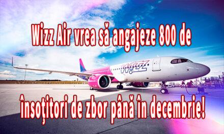 Wizz Air vrea să angajeze 800 de însoțitori de zbor până în decembrie! Unde și când au loc interviurile